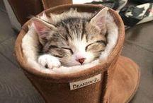 Katzen / Die-Tier-Welt.com beleuchtet alle Aspekte zum Thema Katze und macht deutlich, dass sie, hinter dem oftmals eigenwilligen und facettenreichen Charakter, geliebte Familientiere sind und ihre Liebe auch gerne an uns zurückgeben. http://www.die-tier-welt.com/katzen