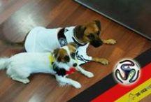 Unsere Bürohunde / Unser Redaktionsteam von Die-Tier-Welt.com ist selbst ganz vernarrt in unsere vierbeinigen Freunde. In diesem Album seht Ihr unsere tierische Besetzung. :-)