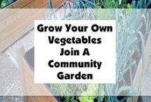 Food Outside Your Front Door / Food Security Issues continue to grow.  Fight back and start growing your own food.  Grow food not flowers in your garden this year.  http://freestuff4dailyneeds.com