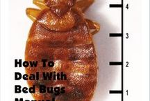 Bedbugs / Bedbugs are starting to be a real nuisance in our communities.  These are tips, ideas, and products to help you beat these pests.  http://freestuff4dailyneeds.com