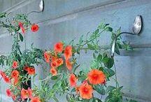 Dachterrasse/Garten