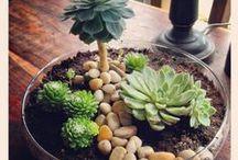 Succulents & Garden