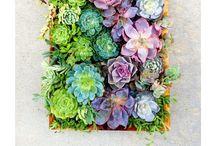 Vertical garden / Garden art