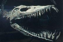 Animal Bones ✖ / Animal bones & skeletons to draw, & paint.