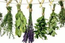 φυτα- βοτανα