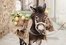 Les ânes / les ânes vrais  et la déco avec des ânes.