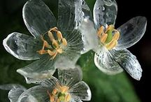 Flowers|Plants