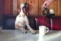 Coffee & Doughnuts ✖