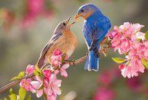 Spring-Springtime-Flowers