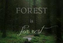 A woodland walk - Forest depths - Nature / Fák, bokrok, gombák, páfrányok, erdei ösvények...
