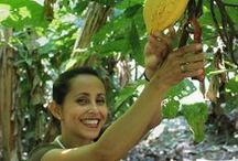 Fair Trade Cocoa / Improving lives in cocoa producing countries.