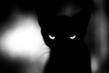 Cats ♥ / instagram: minagolddesign