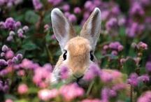 Bunny Season