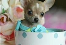 Adorable Teacup Pets