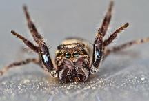 Lovely creepy crawlies <3