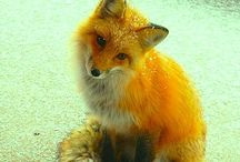 fox'y / .