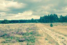Drents-Friese Wold / Prachtig natuurgebied op de grens van Drenthe en Friesland. Onze achtertuin!