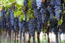 Autour du vin / Vignobles, vins, cépages, appellations, etc...