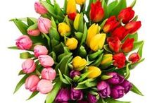 Roflora Tulips / Colorful tulips' bouquets for every occasion. Discover all and make an order for you or someone dear! #tulips