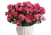 Roflora Plants / Make your office or home beautiful with plants from Roflora!