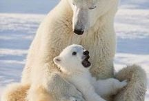 Animal Moms and Babies / Animal photography capturing the eternal bond of mother for her baby