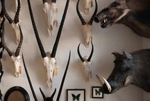 More Taxidermy / Our shop is located in The Woodstock Foundry, a beautifully renovated heritage building on Albert Road in Woodstock, Cape Town.