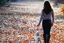 Autumn Amore
