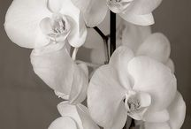 Crazy for orchids
