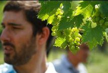 James Kalleske, our winemaker / Please meet our winemaker, James Kalleske.