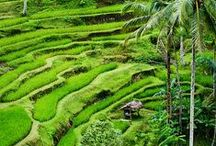 Bali, our home