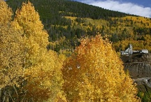 Fall Foliage in Vail