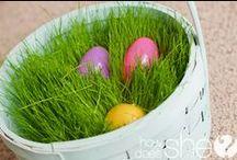 húsvét, tavasz