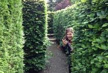Amazing Mazes & Labyrinths / There is something wonderful, dedicated, and mysterious about these garden features...