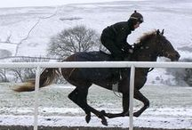 Horses / Some of the wonderful racehorses we have owned over the years....