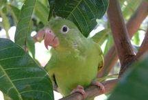 bichos brasil