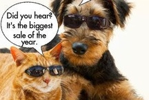 Animals with Shades