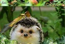 Cute stuff!