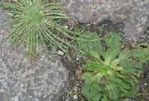 Jardinons la ville / Des techniques à découvrir ou redécouvrir pour sauter le pas et cultiver ses légumes au plus près de chez soi !