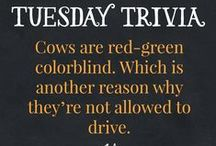 Tuesday Trivia / Fun facts about Guernsey Farms Dairy.