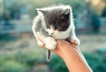 Cute little things in life / by Laura Reiter