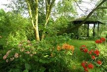 My garden - my love / Lenka Opletalová