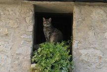 "...""through the window of my eyes""... (Finestre/Windows)"