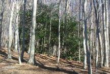 """...""""ora siedo sul letto del bosco""""... (Boschi/Woods)"""