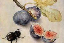 Illustrating Botanical and Nature / Botanicals,Nature Sea  / by Danielle Susman