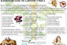 natural remedies for pets / natural remedies for pets
