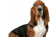Veterinary Resources / Books, website, and other media we draw tips and inspiration from.