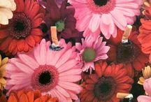 Anthos-logia / Giardino di fiori dipinti