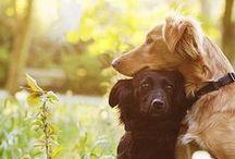 Puppy Love  / by Dara