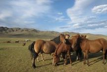La Mongolie et son peuple cavalier / La Mongolie, terre de fantasme et d'aventure pour les amoureux de la nature et des chevaux.