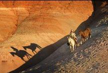 Ranchs et équitation western aux Etats-Unis / Tous ce qui nous rappelle les westerns américains mythiques. Rodéo, canyons, cowboy, quarter horses...